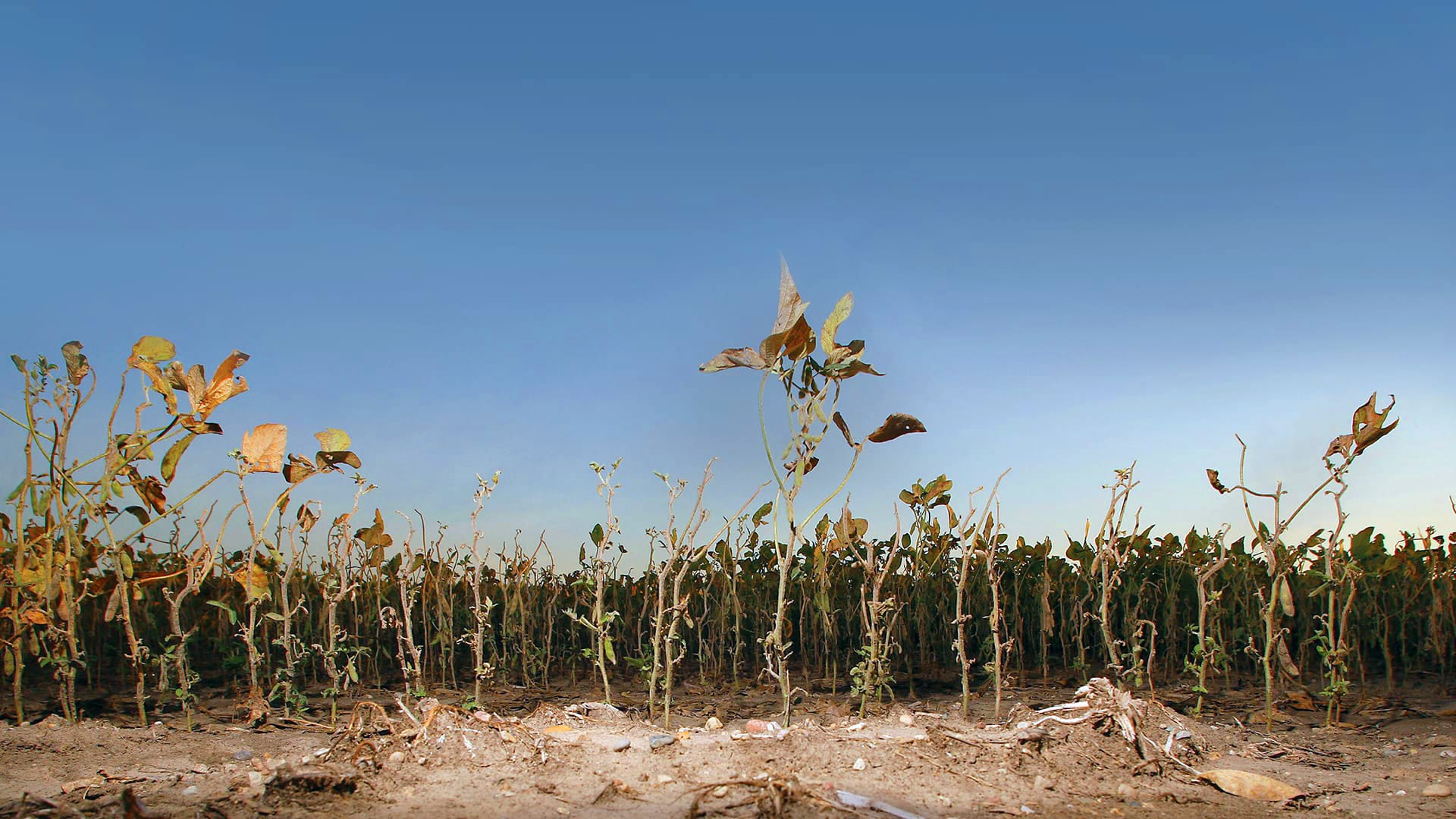 UMD Researchers Tap Nontraditional Irrigation Water