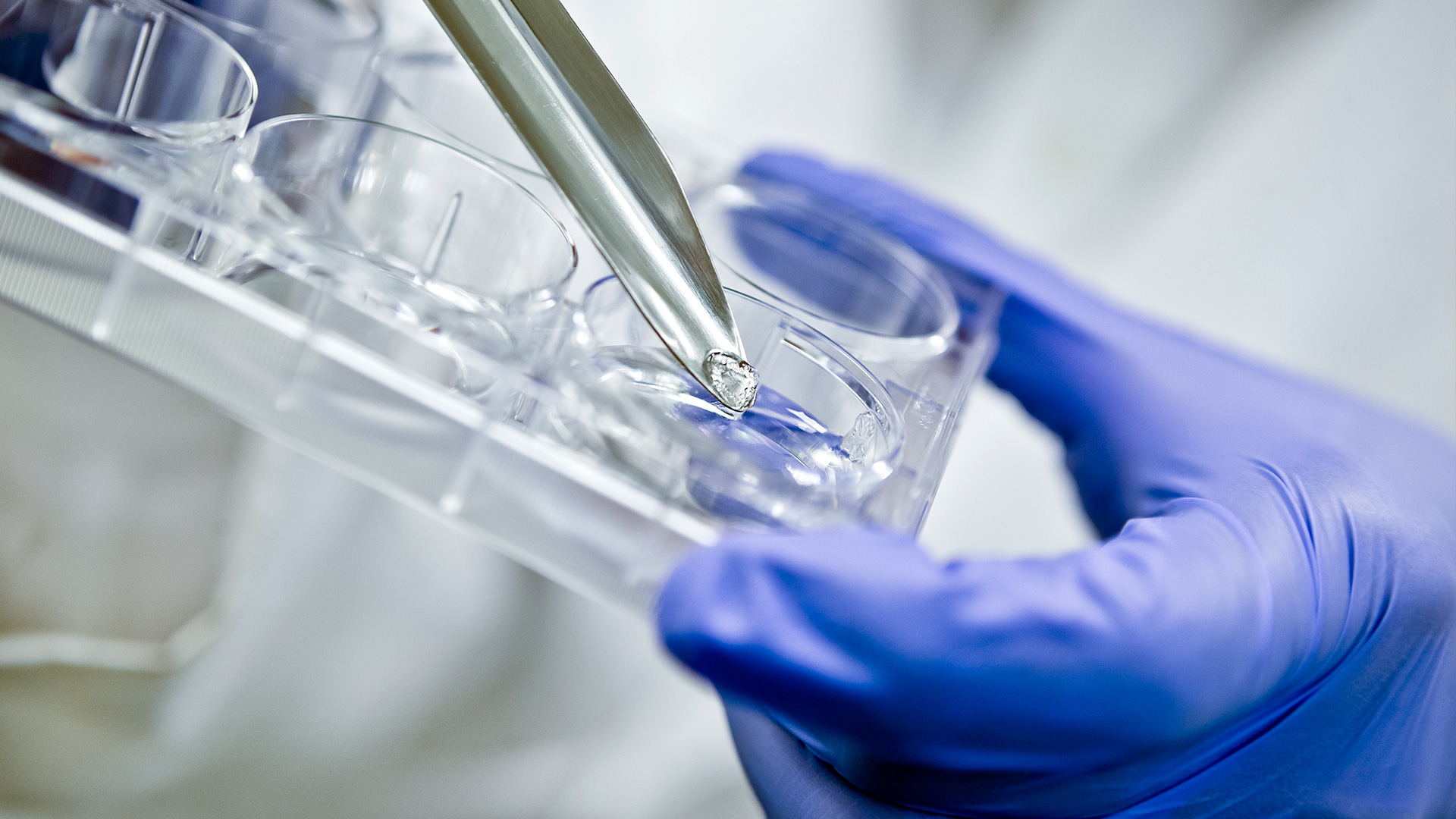 UMD, UMB and Partners Collaborate to 3D Bioprint Tissue, Grafts and More